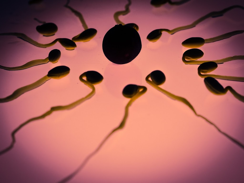 Disadvantages of Releasing Sperm Daily